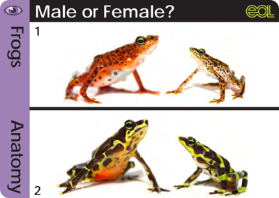 Frog3